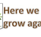 Image Here We Grow Again Header (CCC)