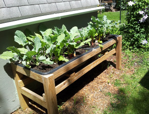 Image: Bucket List Raised Garden Bed-Growing